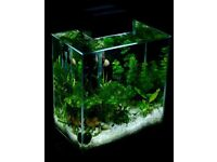 Fluval fish tank Black 46L Complete set up ( Loads of extras ) Like new
