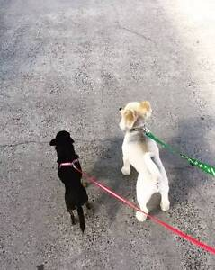 Shire Dog Walking and Care Cronulla Sutherland Area Preview