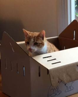Lost Cat Northcote - Ginger and White - Reward