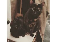 2 lovely cats for rehoming