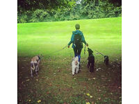Doggy Day Trips - ONLY £10