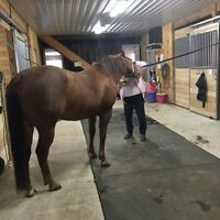 Chesley/Paisley Area Stable Help
