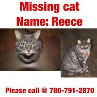 Lost: Reese the cat (house lion) - Missing since July 23
