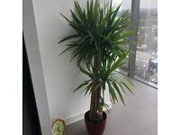 Two Indoor Plants