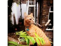 Lost Cat Islington N1