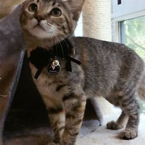 """Adorable female kitten """"Pepper"""" looking for new home, with cage"""