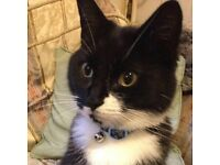 MISSING BLACK AND WHITE CAT IN STRATFORD
