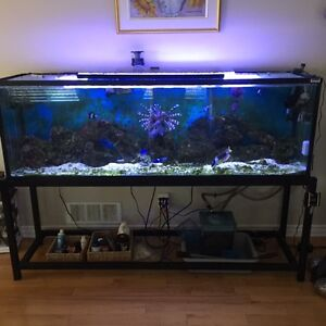 Two salt water aquariums, stands, fish and corals.