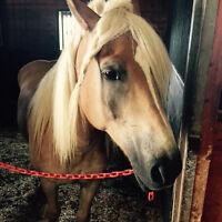 #gok blonde horse