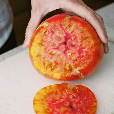 30 PINEAPPLE TOMATO SEEDS 2017 (all non-gmo heirloom vegetable seeds!)