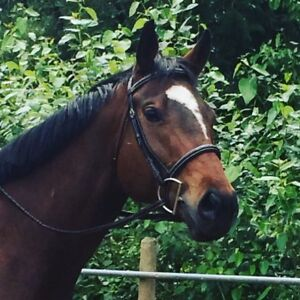 Amazing gelding for lease