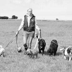 Dog walker and pet sitter required in Bristol to join a team of walkers