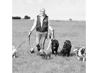 Dog walker and pet sitter required in bath to join a team of walkers