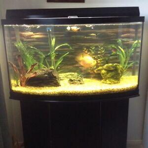46 Gallon Bow Front Aquarium with stand and fish