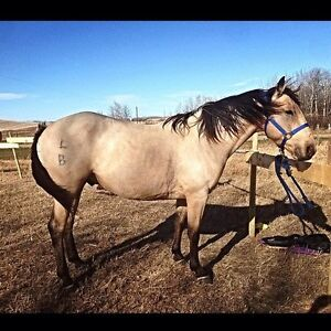 Horse Starting, Miles, Conditioning