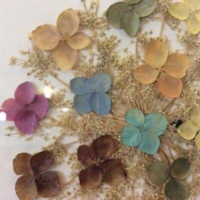 Original Flower Hyacinth Framed Art 21x6 Nature Multi Color