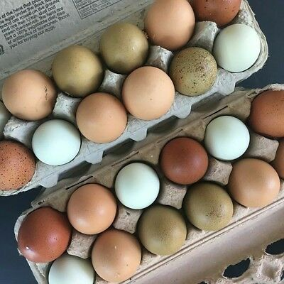 6 Fresh Fertile Chicken Hatching Eggs - Assorted Barnyard Mix Rare Breeds