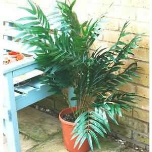 Artificial Tropical Palm 3ft - Home Office Decorative Plant / Tree