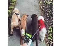 Part -Time Bookkeeper required for small Dog Walking Business