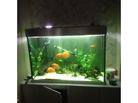 ** Stunning Fluval 275 litre fish tank (not including fish)**
