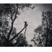 tree removals and more