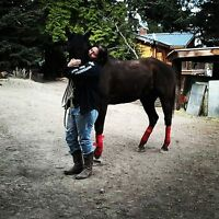 seeking experienced rider to lease well trained mare