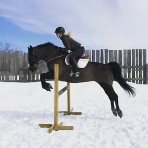 Horse training - Starting, miles, conditioning, show experience