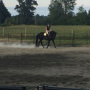 ISO Horses for lease