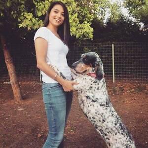 dog sitter Bundoora Banyule Area Preview