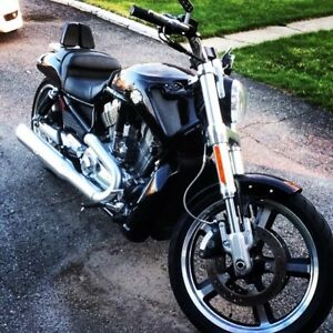 Harley Davidson vrod muscle comme neuf