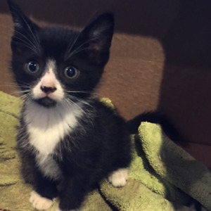 Kittens cute and playful