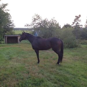 Looking for a Stable Helper for 2 Horses in the Brookfield Area