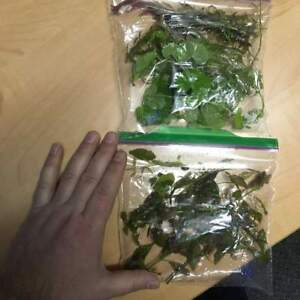 2 bags of Mixed plants