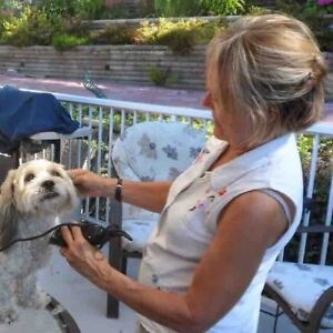 Dog walking; day sit; long term or overnight pet/house sitting