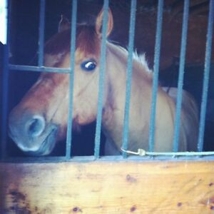 Horse for in barn lease