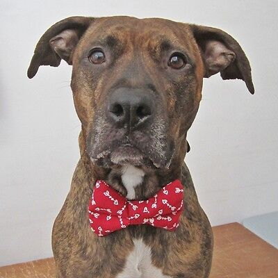Cupid's Arrow Bow Tie For Dogs (UOH) - FREE SHIPPING