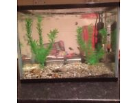 Small Tropical Fish Tank Setup with Fish £35 ovno