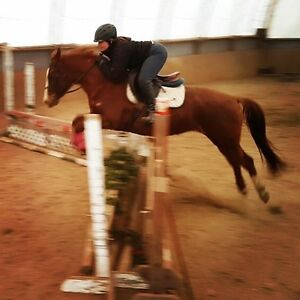 Large pony mare for sale!