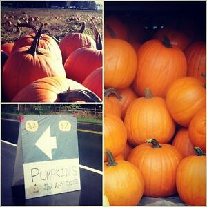 PUMPKINS - - LOWEST PRICE - - $2 ANY SIZE - $2