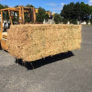 LUCERNE 8X3X3 BALES Forest Glen Maroochydore Area Preview
