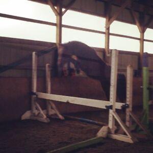 Hunter equitation prospect!