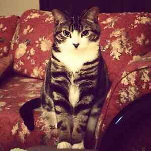 2 Indoor Cats Need Rehoming ASAP Free to good home London Ontario image 4