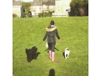 Dog walker and Pet sitting Services