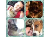Paws and whiskers pet care service