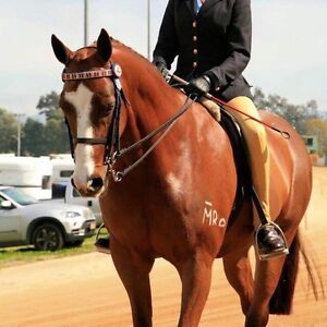 Equine Trainer/Teacher & Stable Hand Matcham Gosford Area Preview