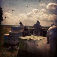 Help Wanted- 2 Skilled Beekeepers for The 2017 Season