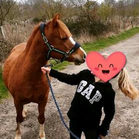 Lovely kind Pony.