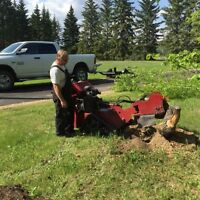 Stump and tree removal