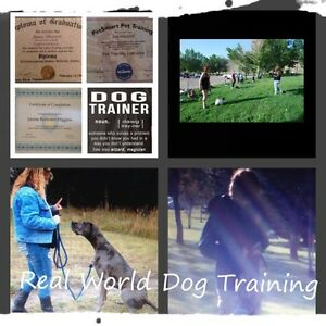 Dog Obedience classes, structured walks, Grooming at its best