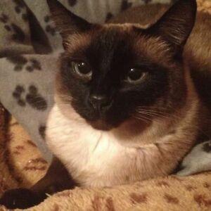 Missing Cat in Barnhartvale Since July 20